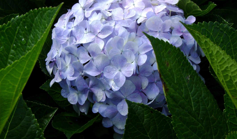hoa, cựu, cảm, lát, loài, чи, vũ,