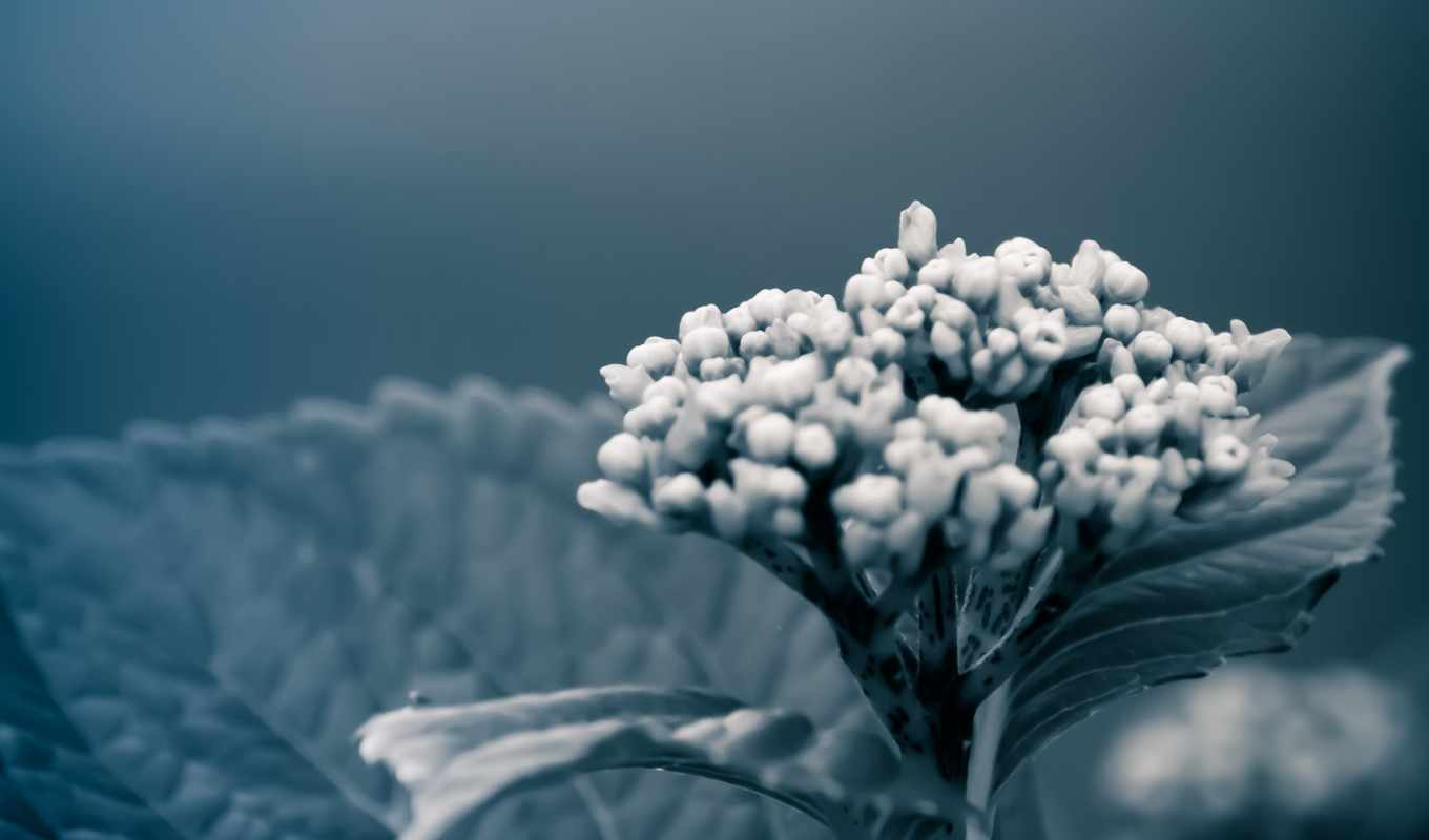 flowers, blue, images, resolution, desktop, with, full, mobile,