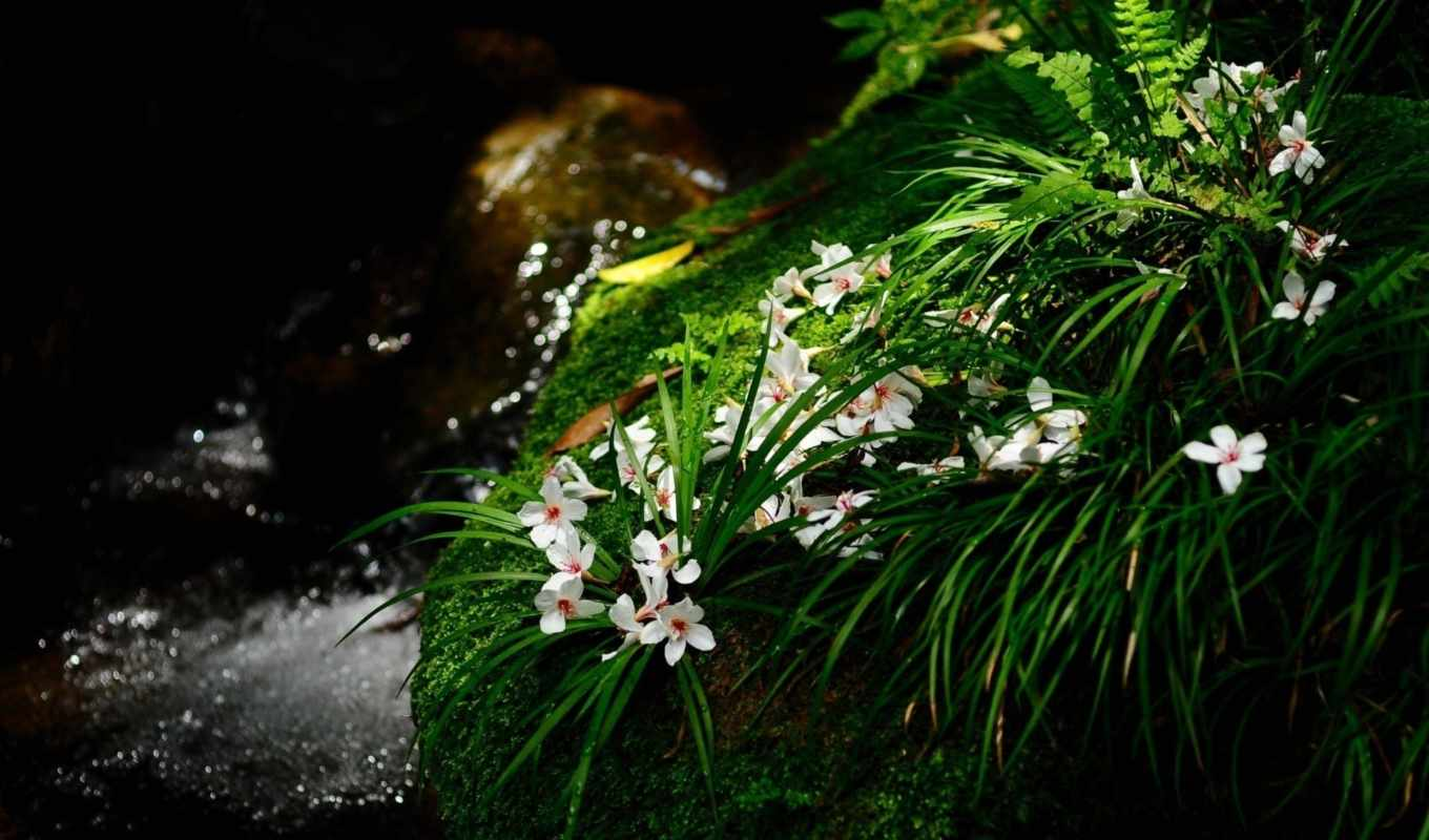 flowers, nature, green, landscapes, free, download, resolution,