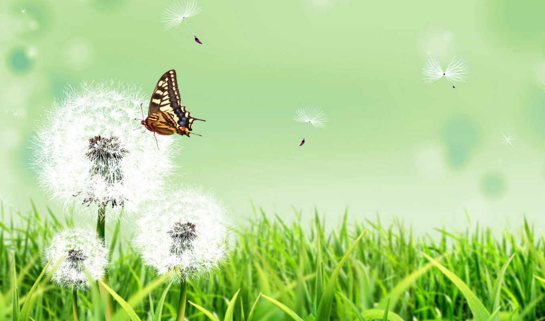 природа, трава, бабочка, цветы, лето, одуванчики,