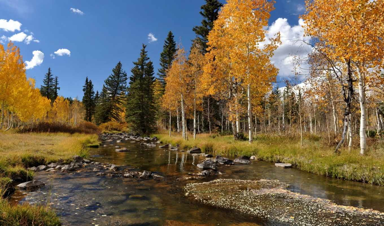 осень, река, landscape, деревя, лес, березы,