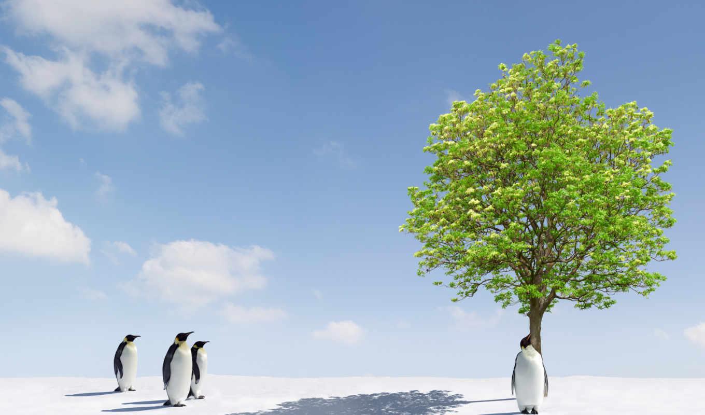 пингвины, zhivotnye, снег, широкоформатные, winter,