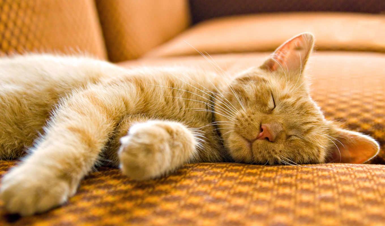 кот, sleeping, коту, валерьянку, zhivotnye, red, favourite, ли,