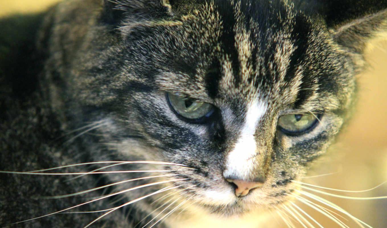 кот, тюлень, задумчивость, zhivotnye,,