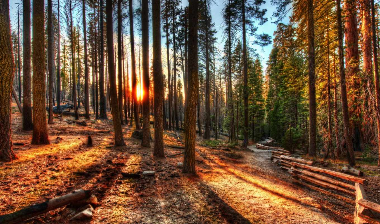 деревья, лес, закат, картинка, california, yosemite, hdr, природа,