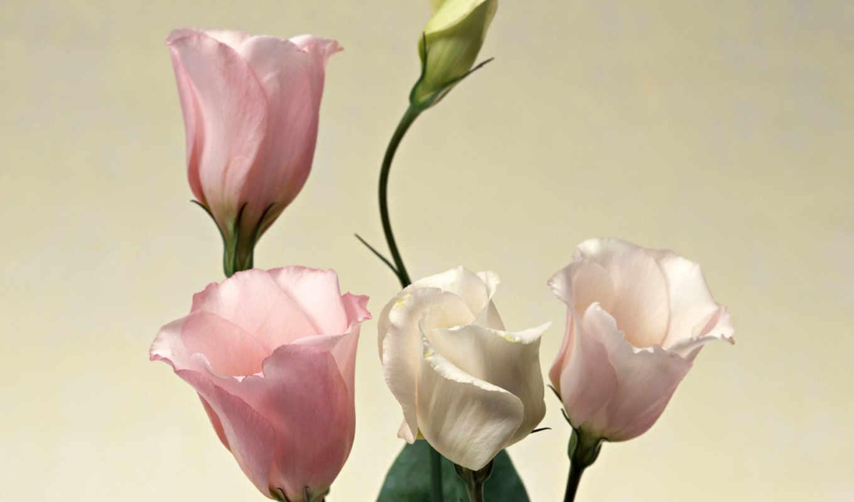 цветы, разрешения, высокого, красивые,