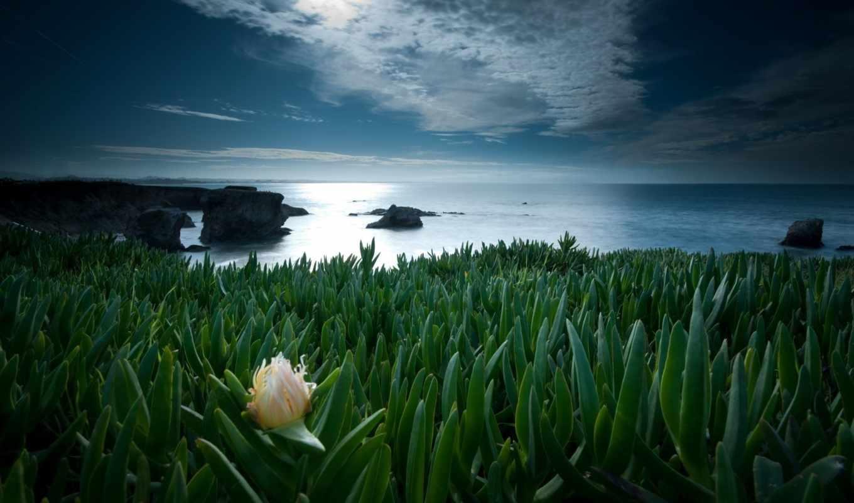 одинокий, цветы, природа, фильмы, спорт, музыка,
