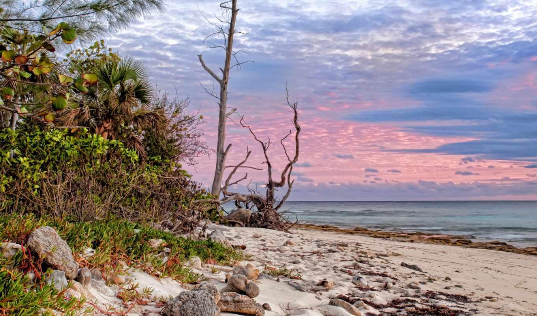 пальмы, песок, море, побережье, sun,