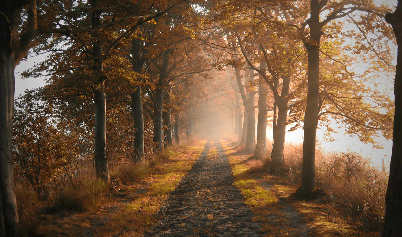 осень, природа, дорога, деревя, аллея,