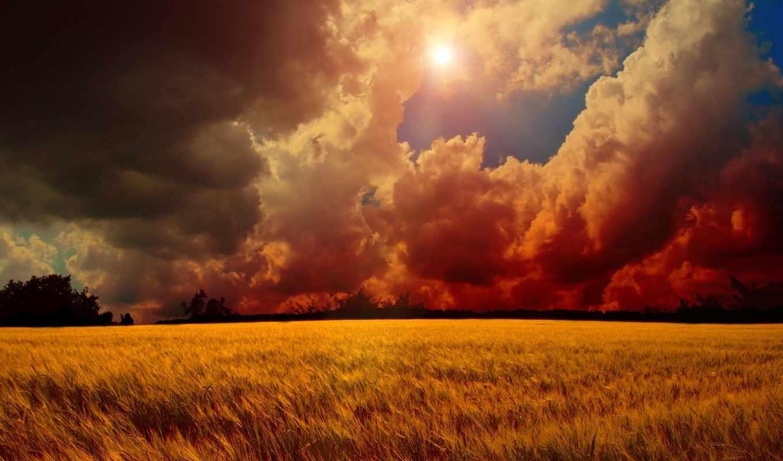 закат, поле, небо, sun, trees, пшеница, тучи,