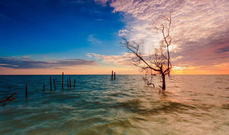 landscape, море, закат, дерево
