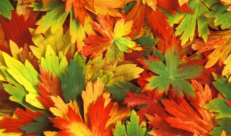 осень, листья, nature, desktop, калейдоскоп, mac, click, download, very, how, minus,