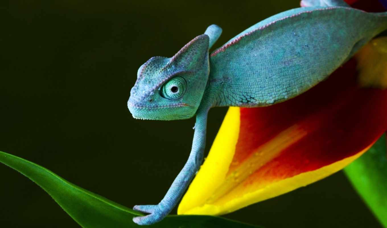 chameleon, добавить, избранные, самых, одной, языком, военный, длинным, интересных, пожалуй,