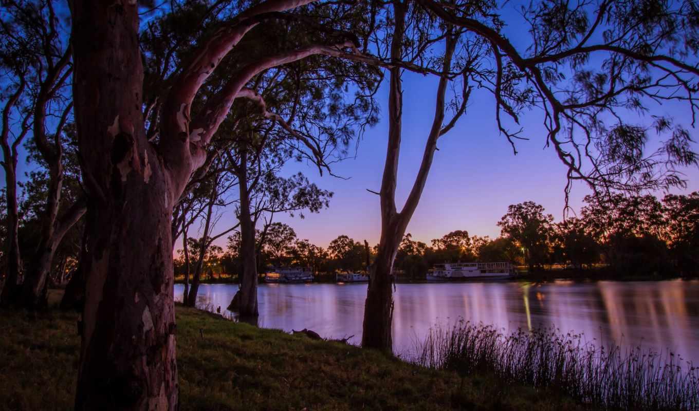 картинка, природа, реки, trees, австралия, ствол, дерево,