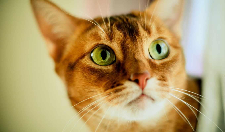 кот, red, ани, картинка, морковь,