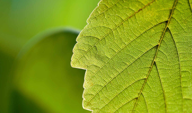 макро, природа, зелёный,