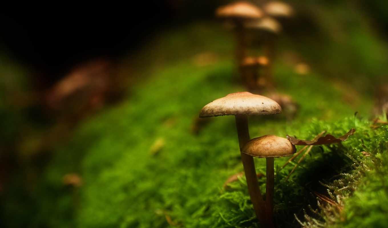 дек, грибы, мох,