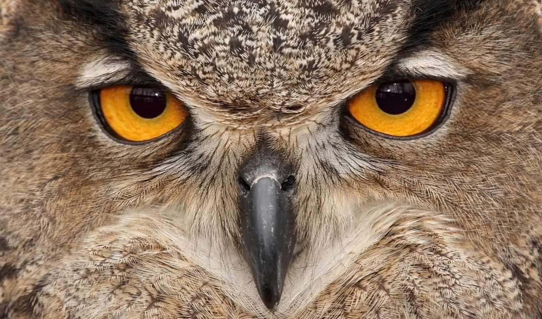 свет, совы, сова, картинка, птицы, zhivotnye, portrait, филин, вышивка,