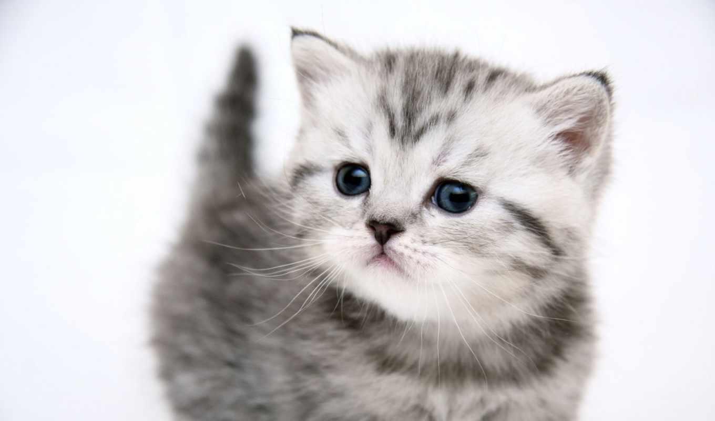 котенок, маленький, kot, рейтинг,