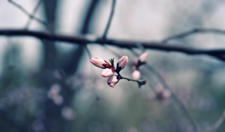 iphone, марта, весна, коллекция, цитатник, красивейших,