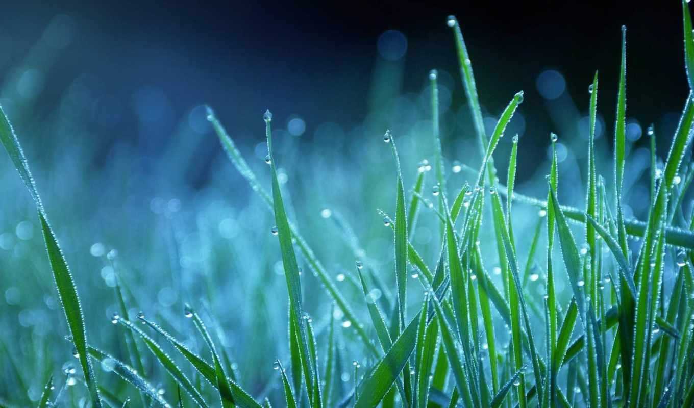 трава, природа, роса, капли, макро, blue,