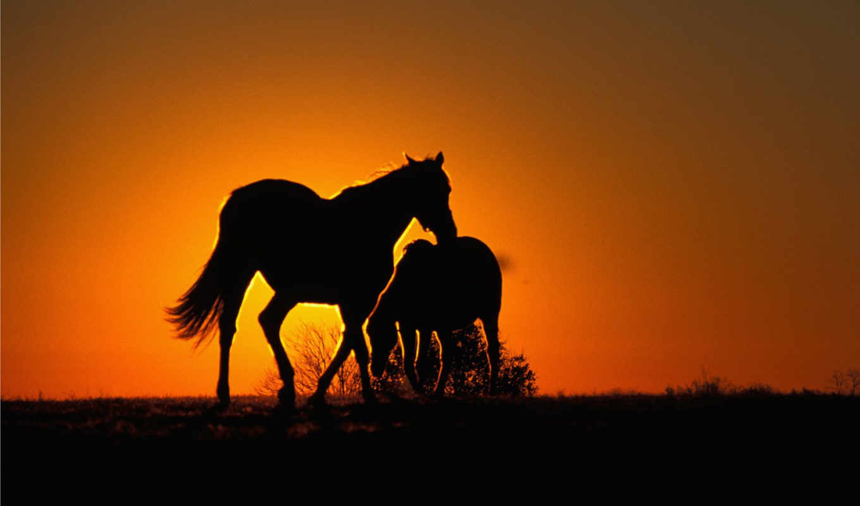 лошади, закате, fone, кони, zhivotnye, закат,