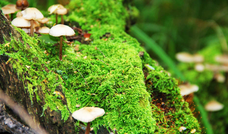 mushrooms, мох, mushroom, full, high, miscellaneous,