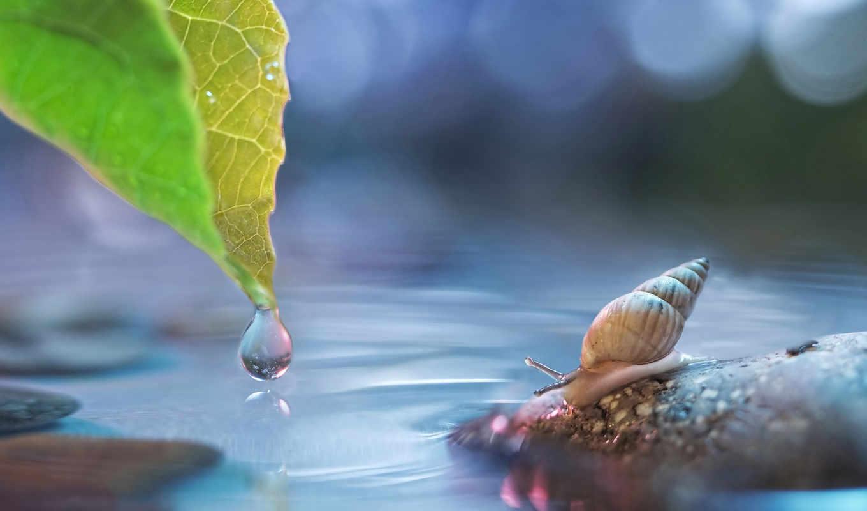улитка, makro, листь, просмотреть, voda, svet, капля, панцирь,