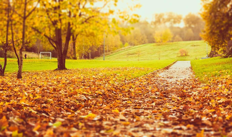 осень, листва, природа, trees,