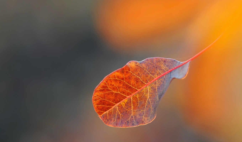 лист, макро, осень, ваниль,