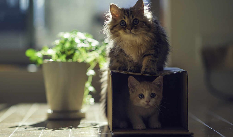 кота, коробка, горшок,