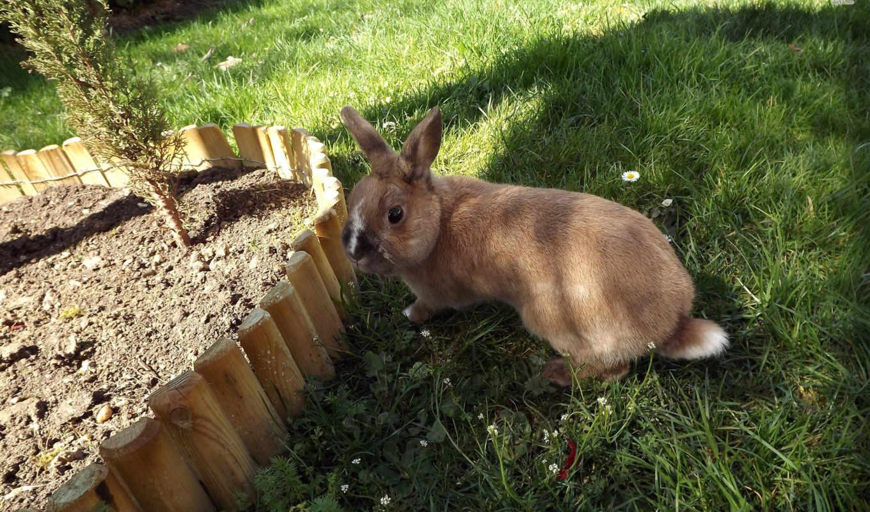 кролик, desktop, animal, animals, bunny,
