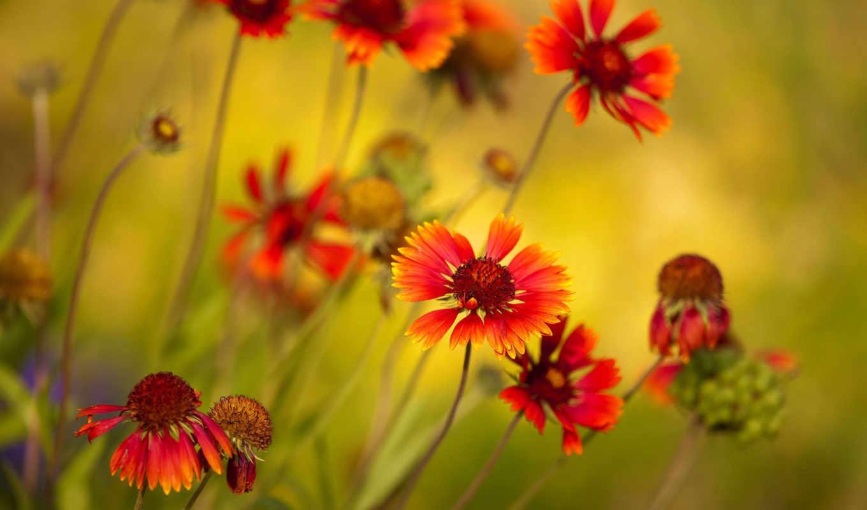 яркие, цветы, макро,
