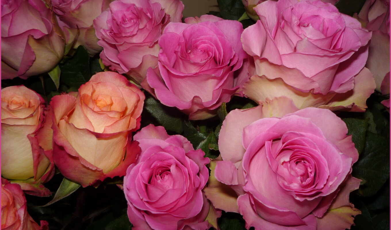 розы, ipad, мини, цветы,