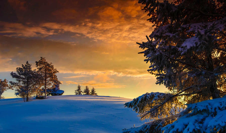 сосны, зима, горы, лес, закат