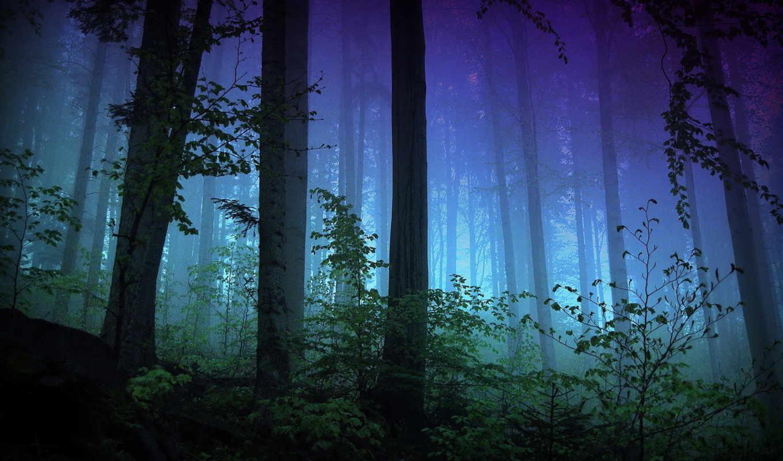 туман, лес, природа, trees, свет, ветки, ночь, кусты, страница, вечер,