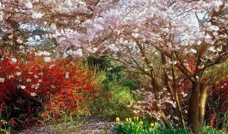 весна, природа, garden, landscape, late