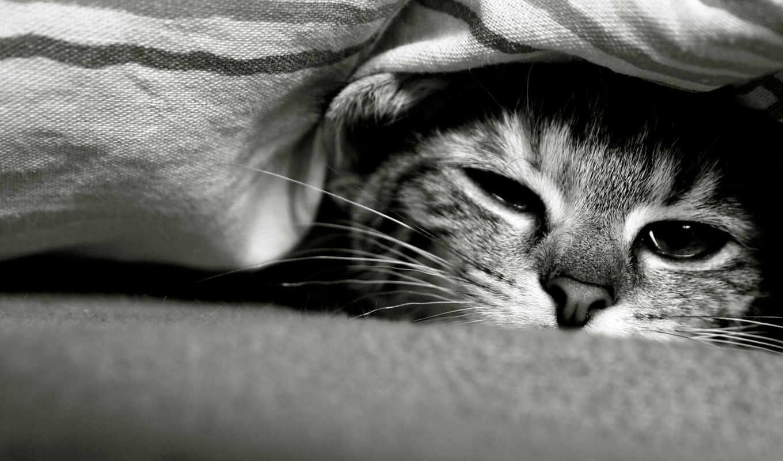 грустный, кот, морда,