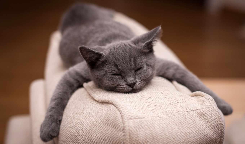 кот, отдых, спит, диван, няша,