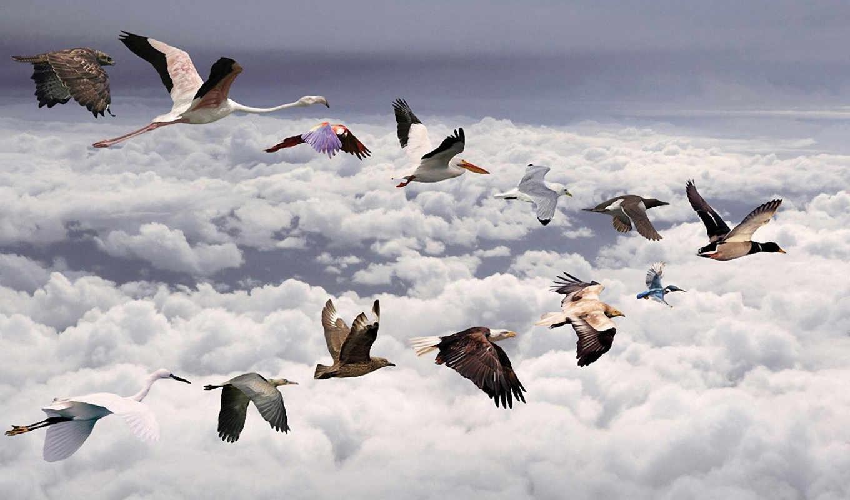 pasari, cu, din, bancuri, calatoare, птица, cute, zboară, glume, prikoale,