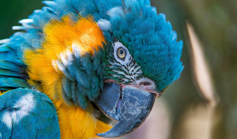 animals, desktop, birds, попугай, resolutions, high,