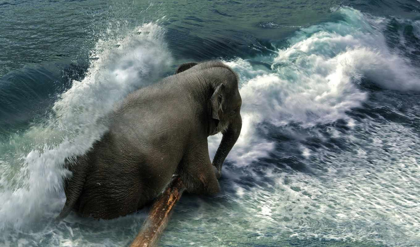 liu, even, фото, manipulations, amazing, elephants, pinterest,