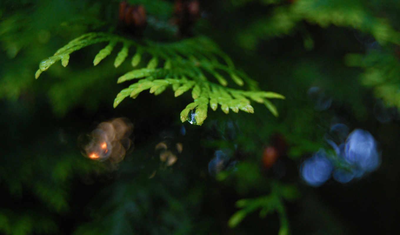 макро, капля, зелёный, лето, красиво,
