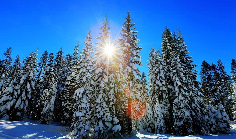 лес, you, amsterdam, winter,