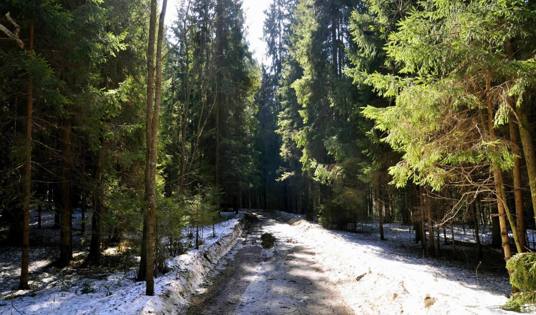 ранняя, весна, лесу,