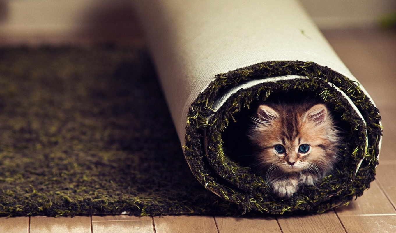 zhivotnye, котята, кошки, домашние, ковре, animals, cats, pets, kittens, ковёр,
