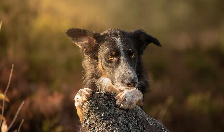 смотреть, взгляд, собака, порода, камень, глаза, морда, vulnerable, свет, portrait