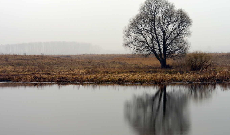 природа, дерево, река, картинка, смотрите, изгиб, качестве, картинку, похожие, max,