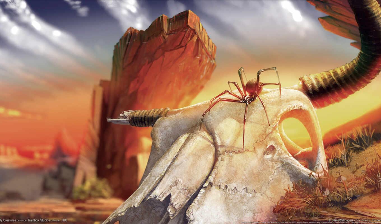 паук, череп, пустыня,
