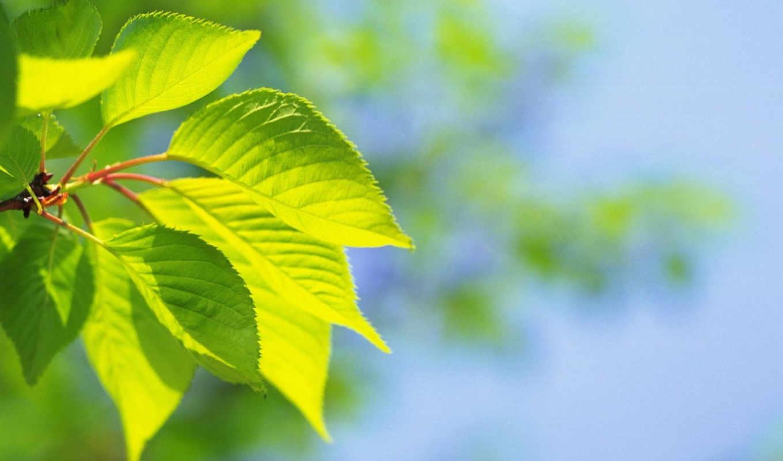 лето, лист, зеленые, листочки, рисунки, фотографии, naturaleza, desktop, популярные, картинка,